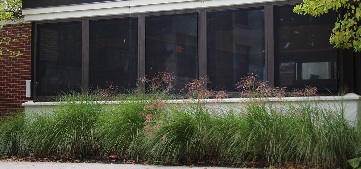Some of the plants and foliage around the front of Evergreen Hall.