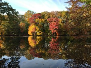 Fall foliage on a river