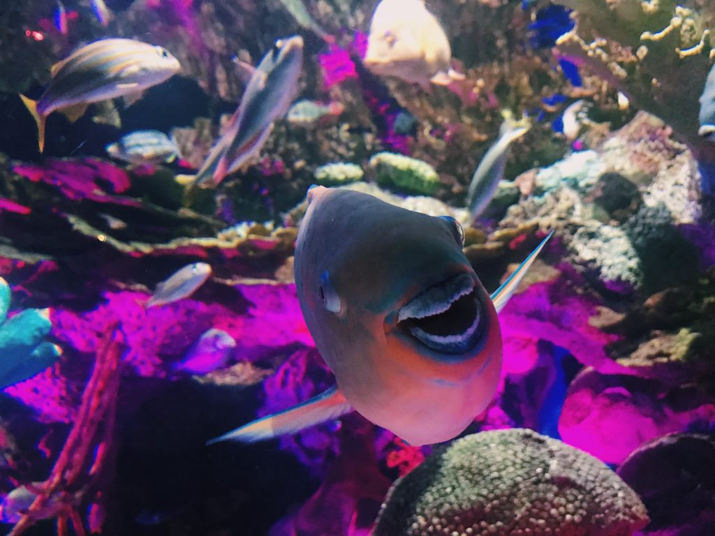 close up of a fish that looks like it's smiling at the camera