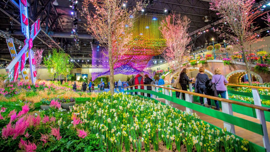 flowers at the Philly Flower Show, colorful and gorgeous!