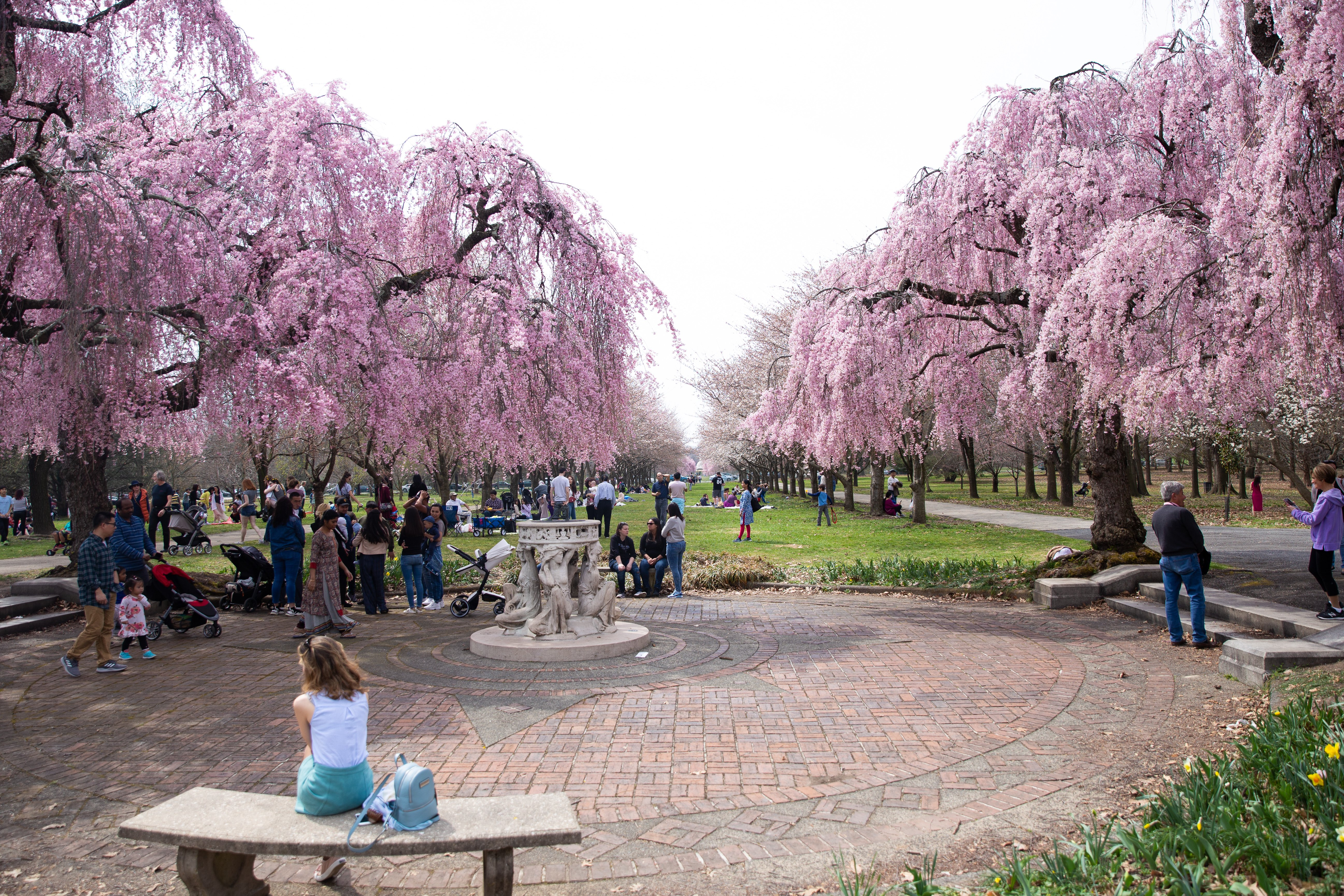 Picture of cherry blossom trees at Fairmount Park in Philadelphia, PA.