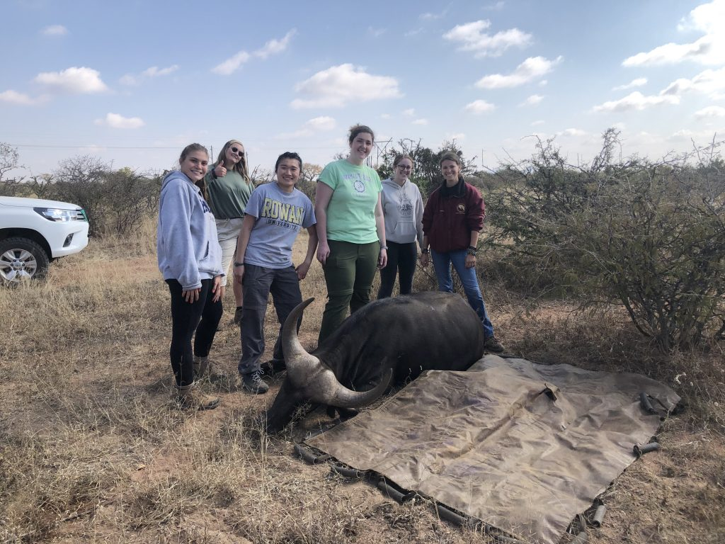 Rowan Pre-Vet Club members posing next to a buffalo