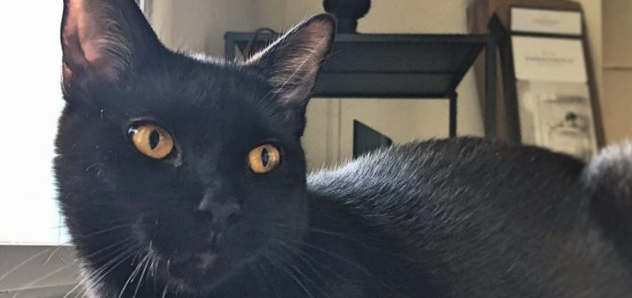 PROF pet Salem the cat, owned by advertising major Justin Borelli.