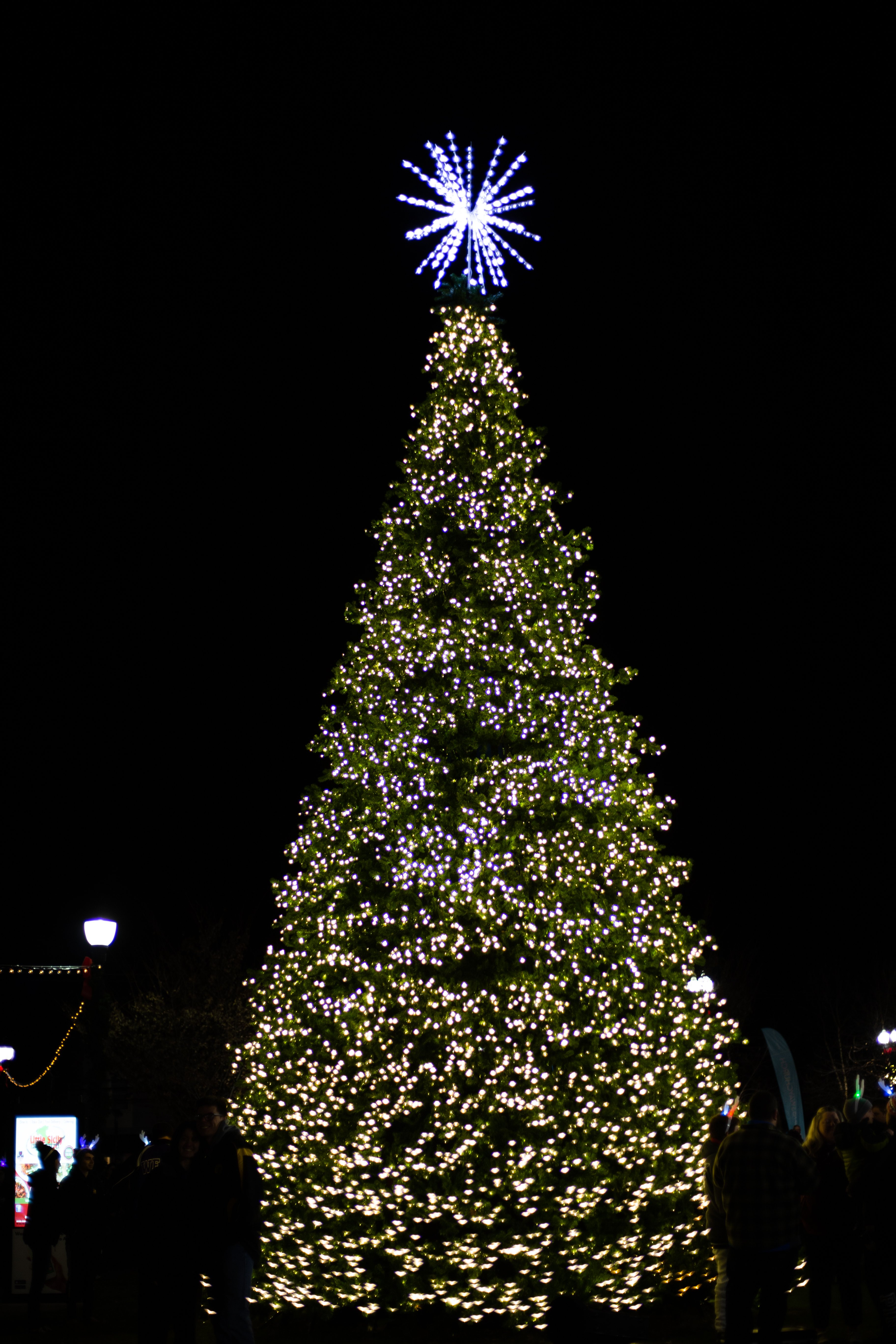 The tree displayed at the festival.