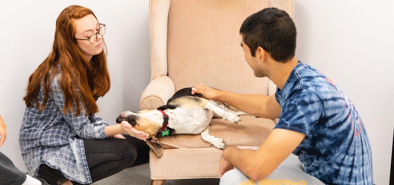 students petting a dog at the humane society shelter