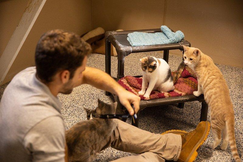 Rowan student volunteers at animal shelter