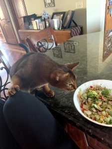 Buddy begs for salad
