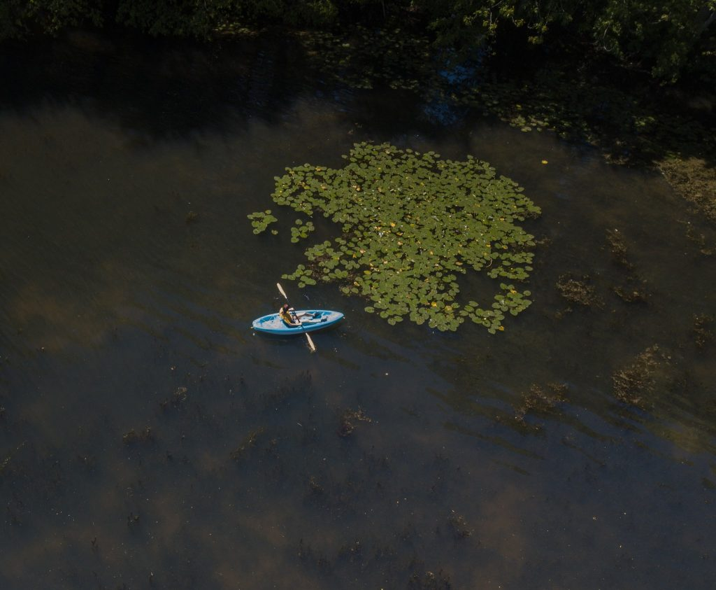 an aerial photo of Jen in a blue kayak surrounded by lilypads in Alcyon lake.