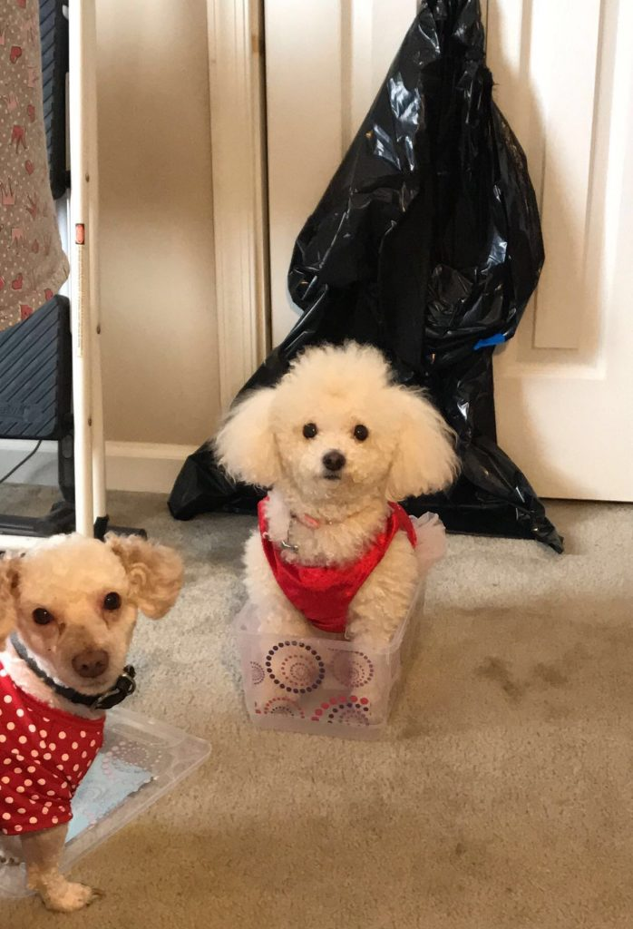 A picture of Tatianna's two dogs.