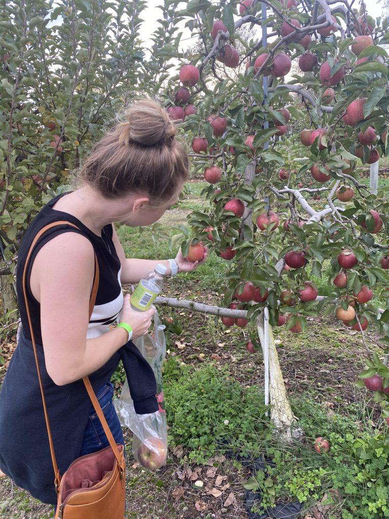 Olivia picking apples.