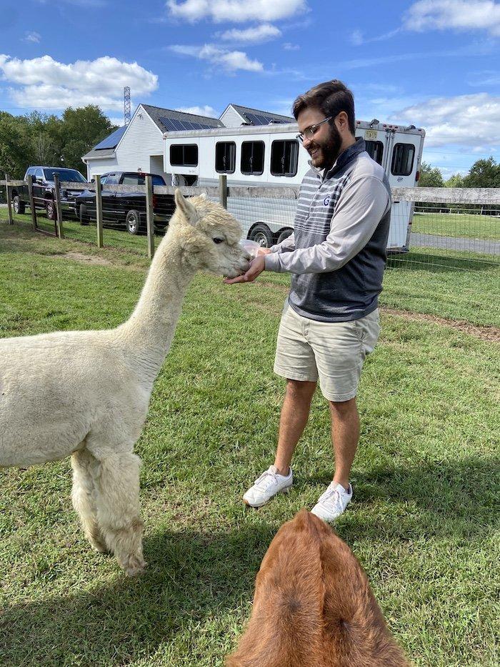 Dayne feeding a white Alpaca.