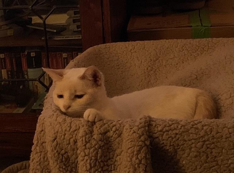 Taylor's cat, Primrose.