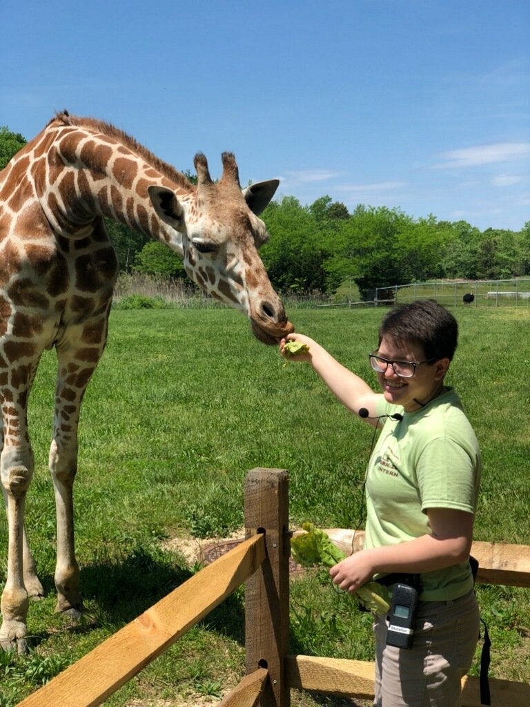 Allison feeding a giraffe while she was interning at the zoo.