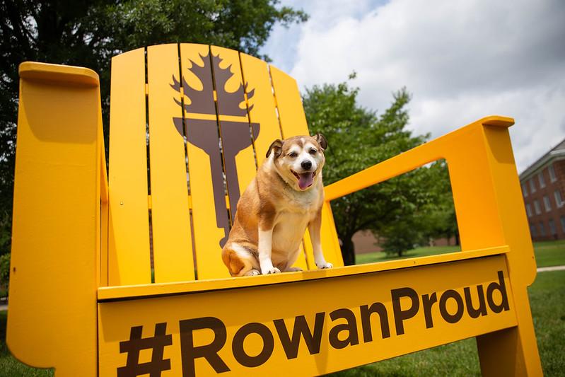 Dog sitting on Rowan Proud chair.
