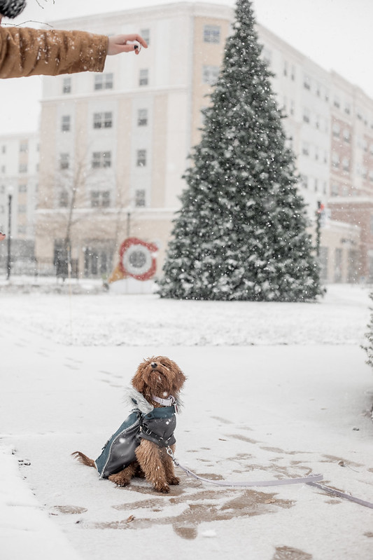 Dog playing with owner in snow on Rowan Boulevard.
