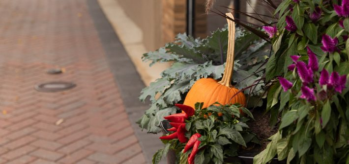 Fall themed decorations in Pitman.
